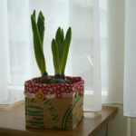 Hyacinths in recycled pot
