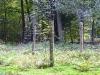 Veluwe national park,1