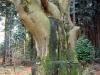 de-oude-boom