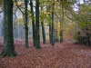 Veluwe park, autumn, 3