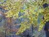 Veluwe park, autumn, 4