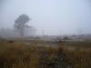 Veluwe park, autumn, 5