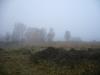 Veluwe park, autumn, 7