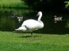White-swan-Sonsbeek-Arnhem-1