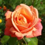 —Netherlands— Gardens of Middachten castle