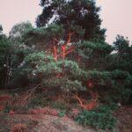 —Netherlands— Het bos en de heide, Gelderland