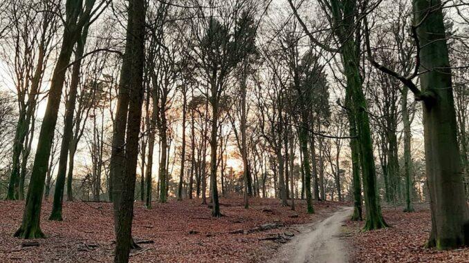 Sunset in Veluwezoom