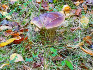 Mushroom, October