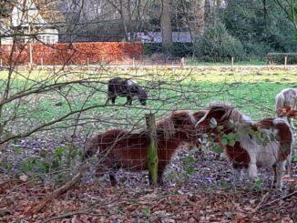 Ponies in Eerbeek